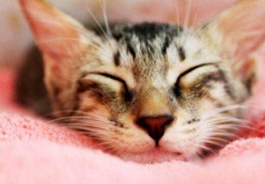Защитники животных создали Baby box для котят