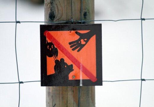 Lācenes Mades liktenis: dzīvnieku pazinēji piekrīt lēmumam nošaut; notikušajā atbildība arī uz cilvēku pleciem